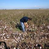 Αυτοψία σε πληγείσες καλλιέργειες του Δήμου Σοφάδων  πραγματοποίησε ο ΕΛΓΑ