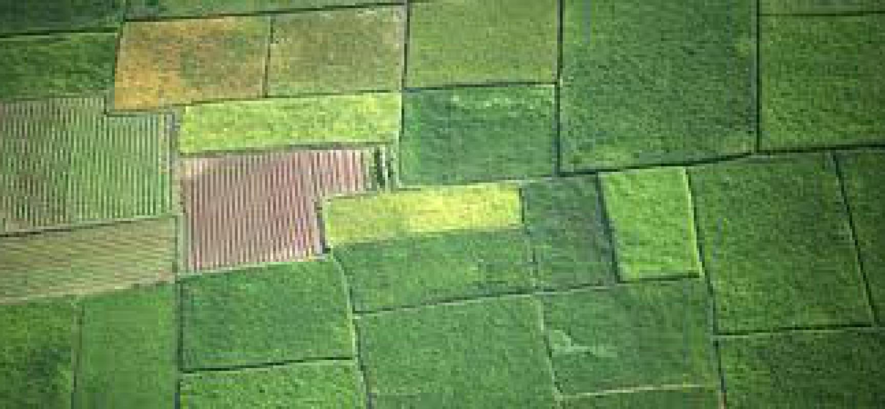 Δημόσια φανερή επαναληπτική πλειοδοτική δημοπρασία για την εκμίσθωση δημοτικών  αγροτεμαχίων