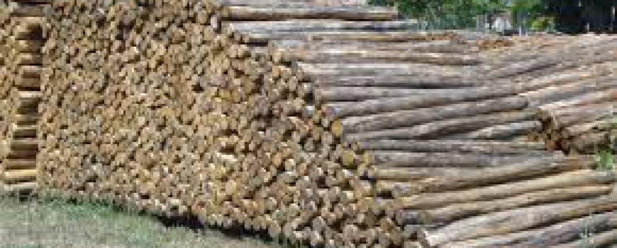 Πραγματοποίηση αναβληθείσας φανερής πλειοδοτικής δημοπρασίας για υλοτομία σε δάσος Ρεντίνας