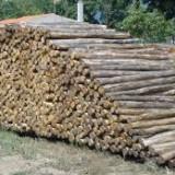 Διακήρυξη πλειοδοτικής δημοπρασίας για υλοτομία συστάδων διακατεχόμενου δάσους Ρεντίνας
