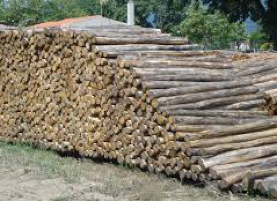 Διακήρυξη ενοικίασης δικαιώματος υλοτομίας συστάδας στο δημοτικό δάσος Θραψιμίου