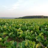 Ανάρτηση καταστάσεων πληρωμής των δικαιούχων των δράσεων ,«Σύστημα Ολοκληρωμένης Διαχείρισης στην παραγωγή ζαχαροτεύτλων 2η πρόσκληση»  και «Αμειψισπορά με ξηρικές καλλιέργειες σε καπνοπαραγωγικές περιοχές  1η και 2η πρόσκληση», για το  έτος 2014 ,για την Π.Ε.  Καρδίτσας