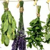 Επιλογή εκπαιδευομένων για Κατάρτιση σε Αρωματικά και Φαρμακευτικά Φυτά