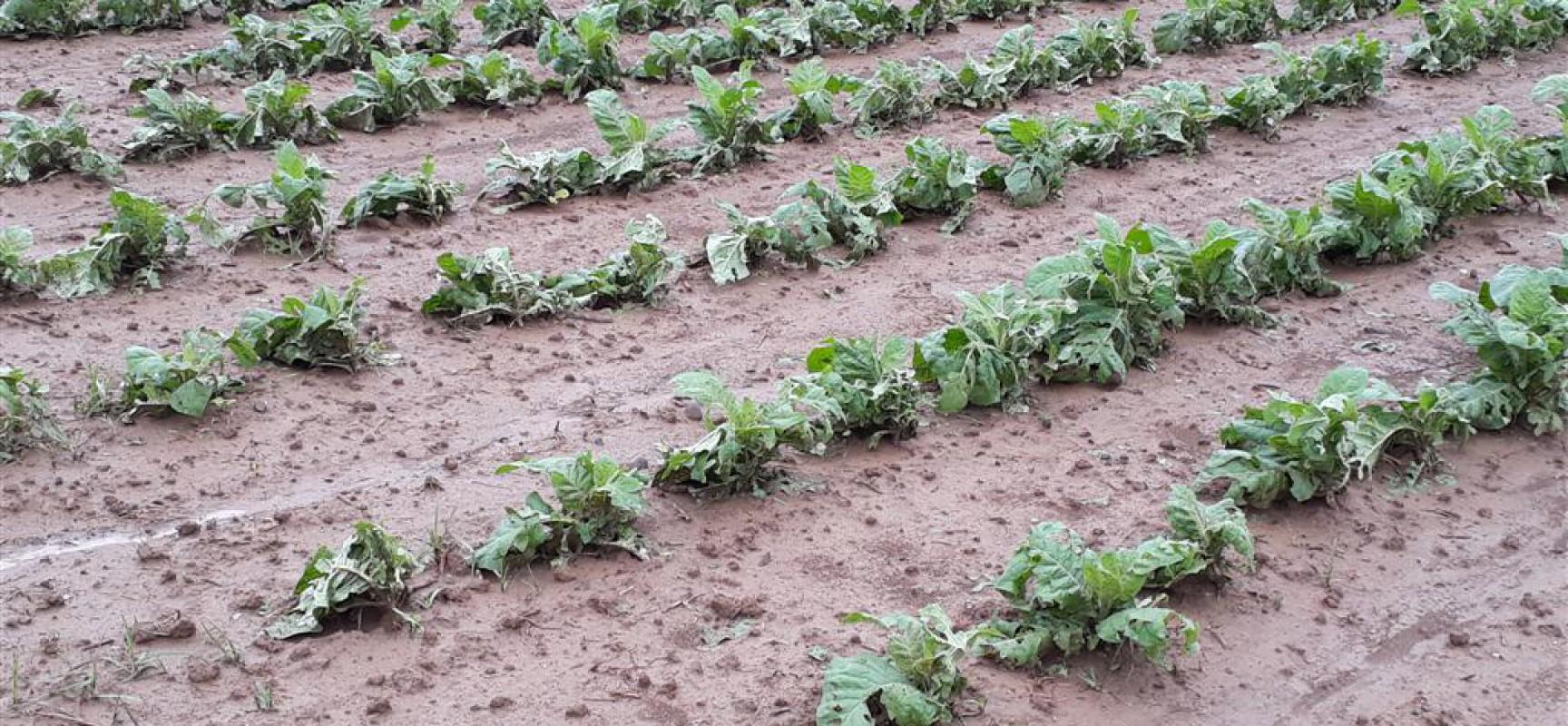 Δηλώσεις ΕΛΓΑ για ζημιές από τις πρόσφατες βροχοπτώσεις & χαλαζοπτώσεις